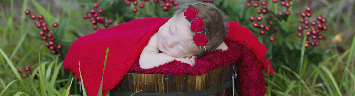 Tracy Gabbard Photography - Holiday Photography