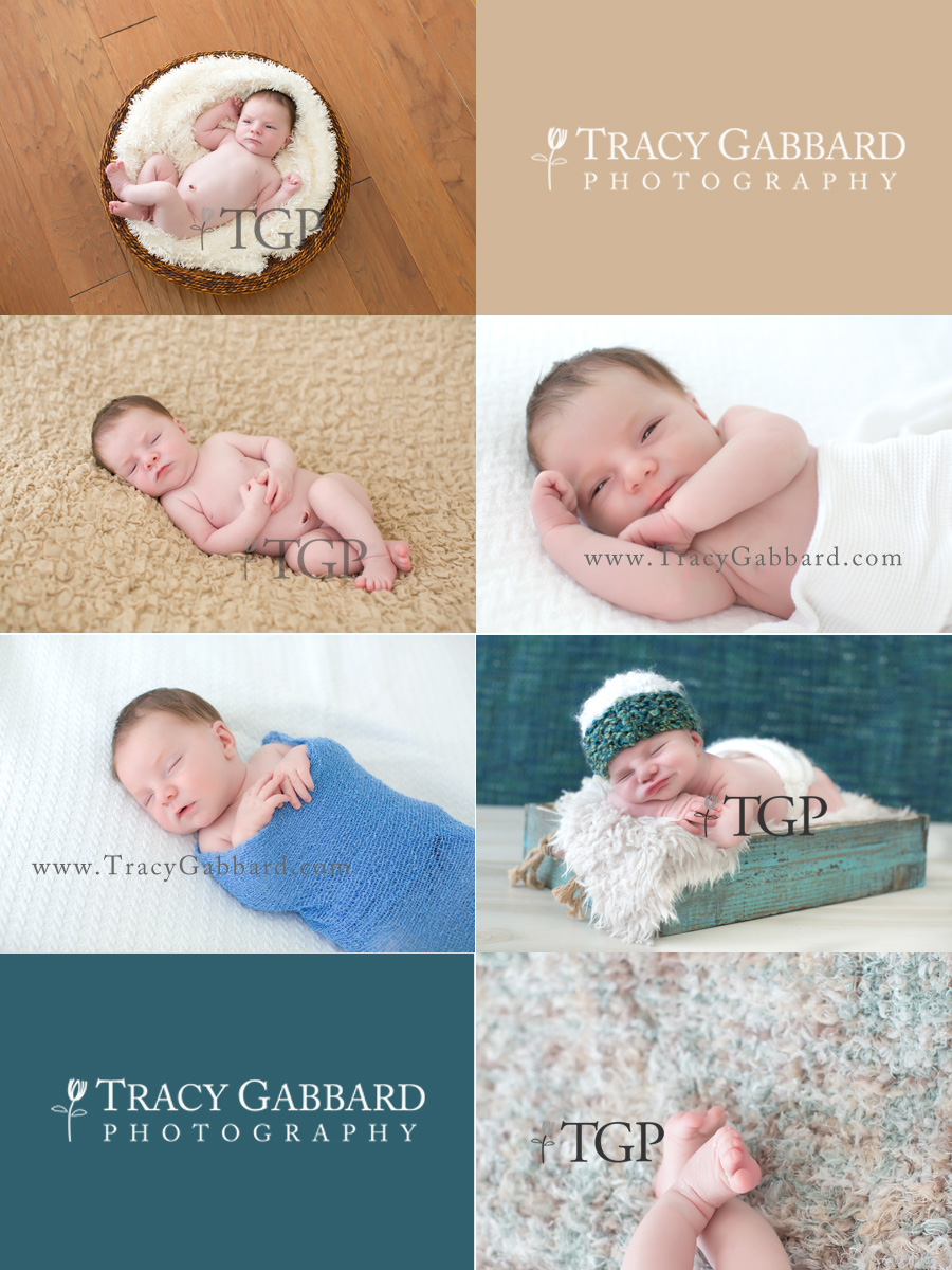 clearwater newborn photographer