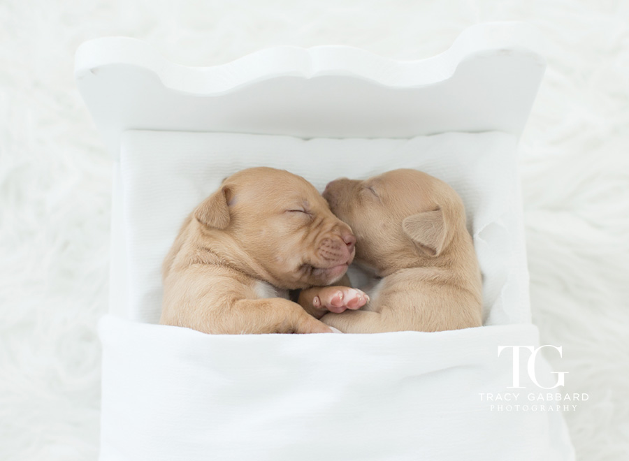 Puppies Photography - blog by Tracy Gabbard Photography, TGP